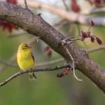 Bird Feeders Are For The Birds!