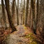 Walking Towards Spring