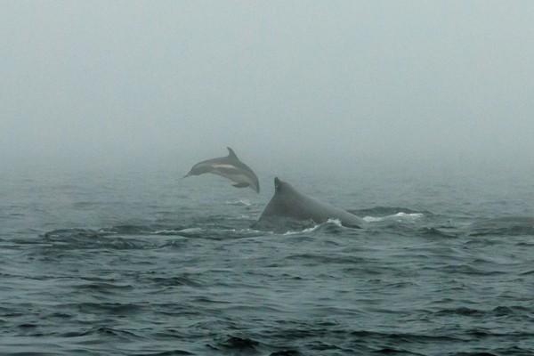 Whale Watch Nova Scotia